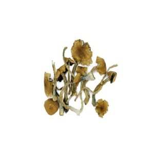 real mushrooms